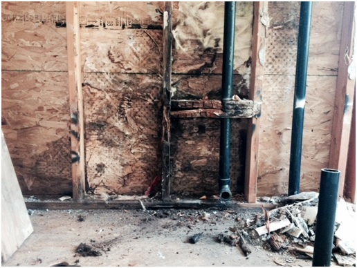 moldy water damaged walls uncovered